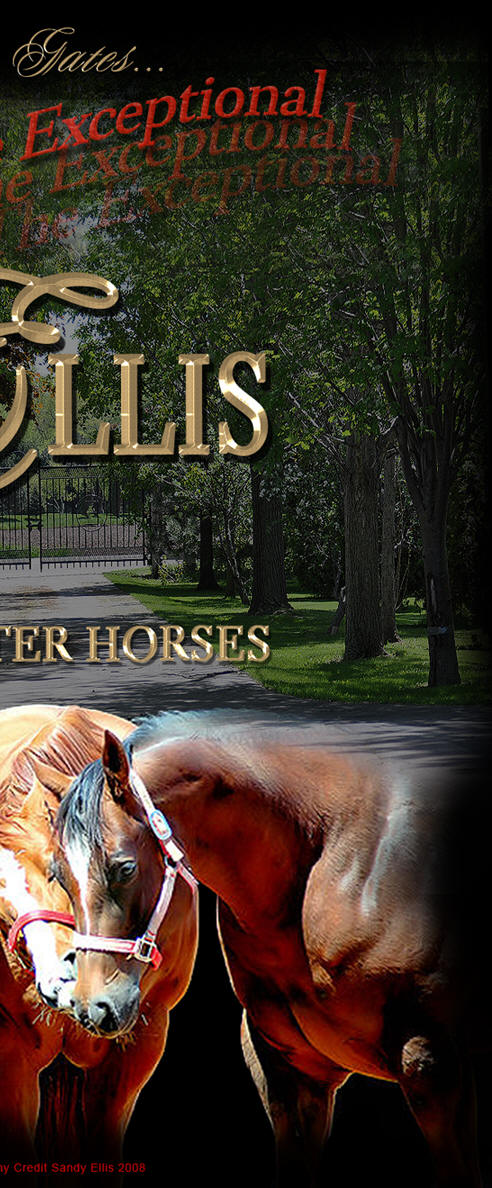 Ellis Quarter Horses, Expect the Exceptional!